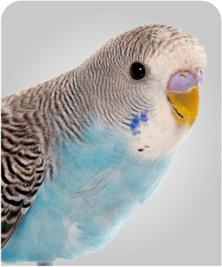 Artwork_PetZone_Birds_wide
