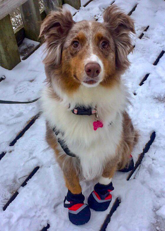 Winter Dog Booties