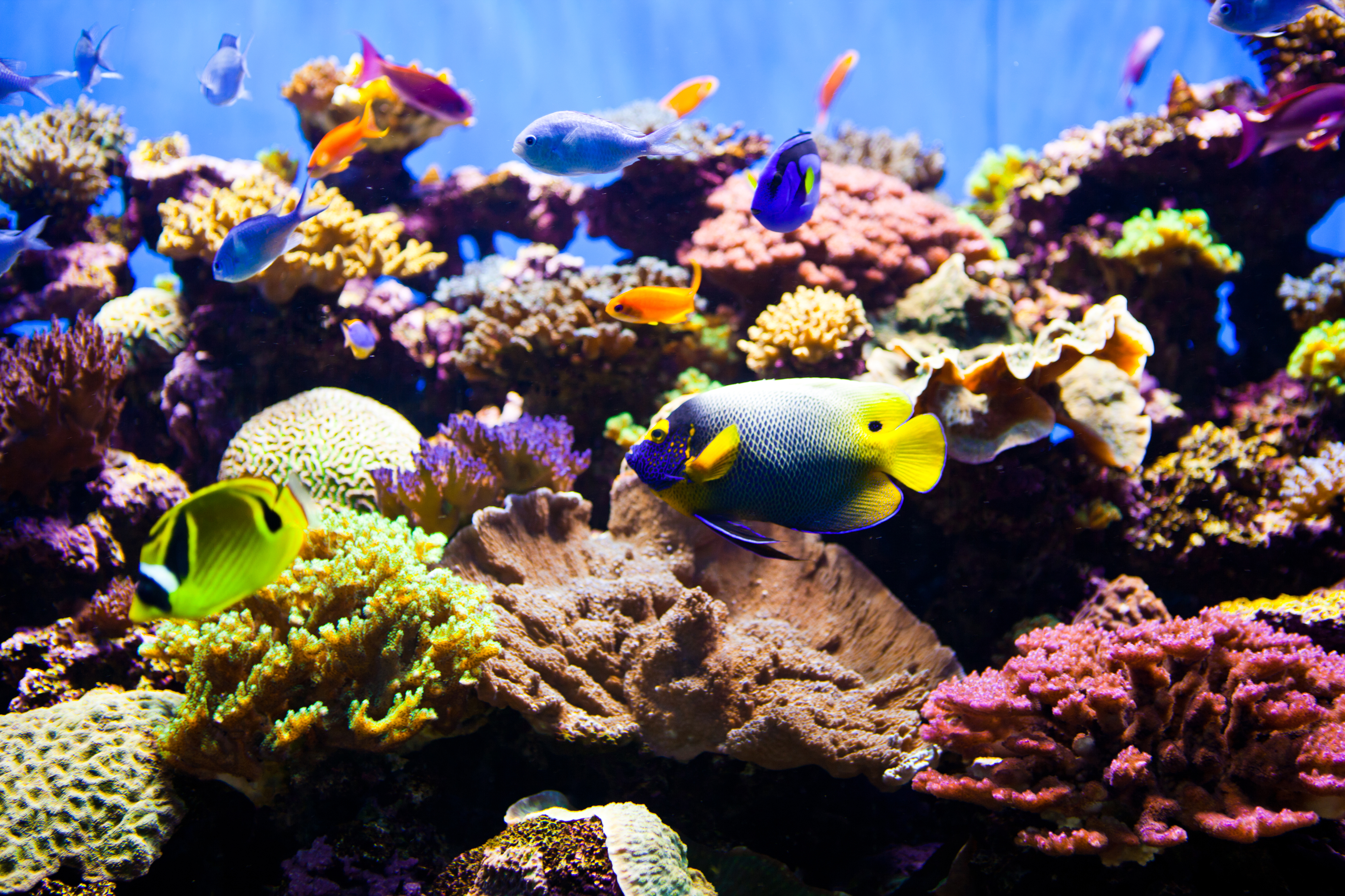 Abundance of tropical fish in an aquarium. Very colorful ocean fish with live coral.