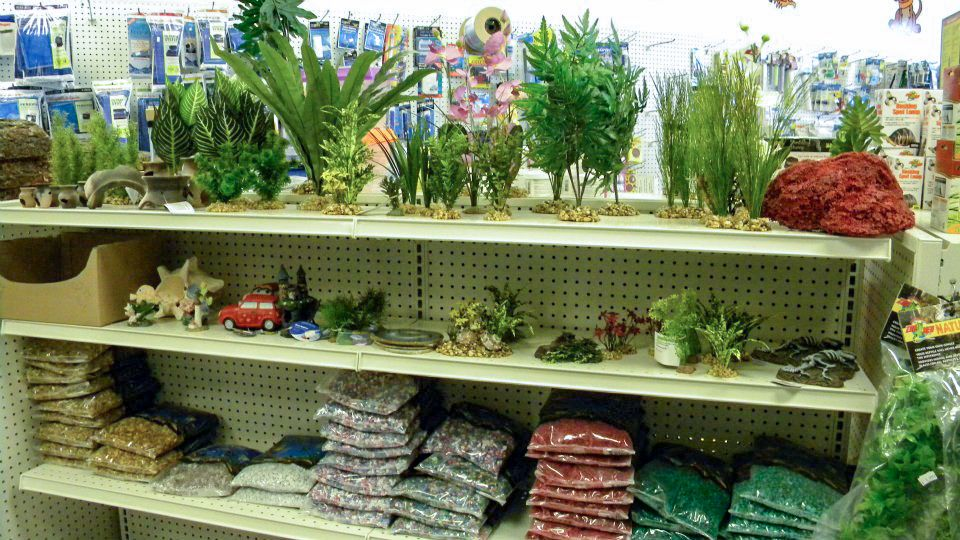 Plants for Fish Tank
