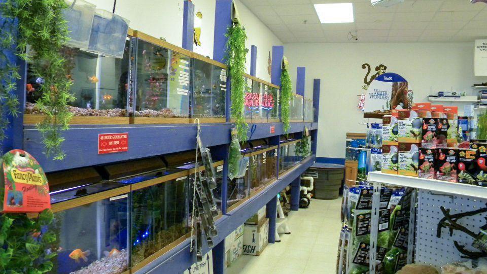 Shop_Fish3